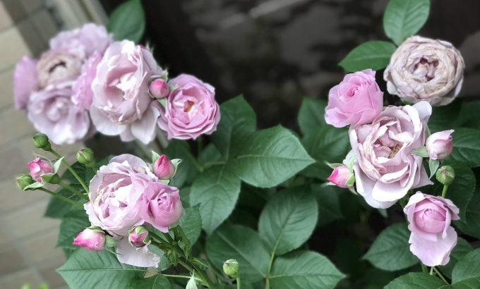 お店の花壇の花が咲きだしました~~☆