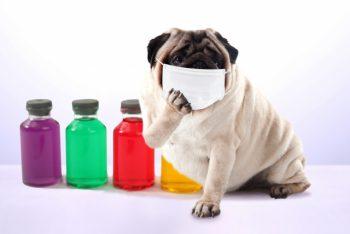 マスクをしての施術。 有り難いです・・・。 薬剤臭が身体に与える影響は大きい。